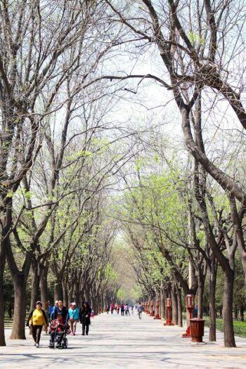 Personnes circulant au milieu de rangées d'arbres