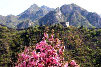 Fleur rose en premier plan et montagne et tour en second plan